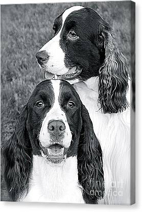 Canvas Print featuring the photograph Two Of A Kind by Barbara Dudley