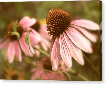 Cone Flower Canvas Print - Two Of A Kind by Jessica Jenney