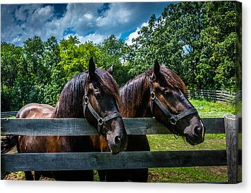 Two Of A Kind Canvas Print by Randy Scherkenbach