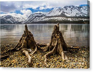 Two Old Friends Canvas Print by Mitch Shindelbower