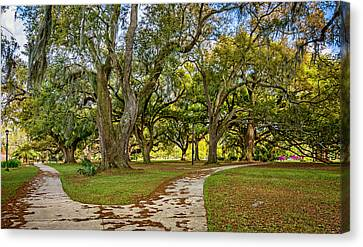 Two Paths Diverged In A Live Oak Wood...  Canvas Print by Steve Harrington