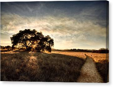 Two Paths Canvas Print