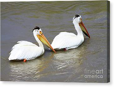 Canvas Print featuring the photograph Two Pelicans by Alyce Taylor