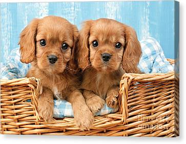 Two Puppies In Woven Basket Dp709 Canvas Print
