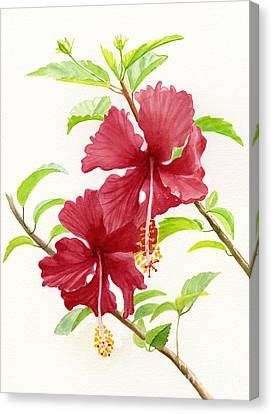 Two Red Hibiscus Flowers Canvas Print