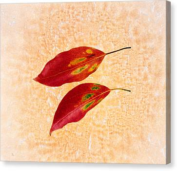 Two Red Leaves On Pink Background Canvas Print