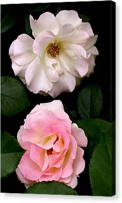 'two Roses' Canvas Print