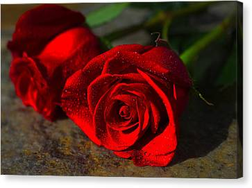 Canvas Print featuring the photograph Two Roses by Richard Stephen
