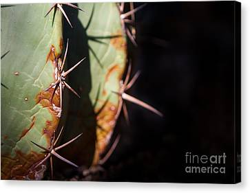 Two Shades Of Cactus Canvas Print by John Wadleigh
