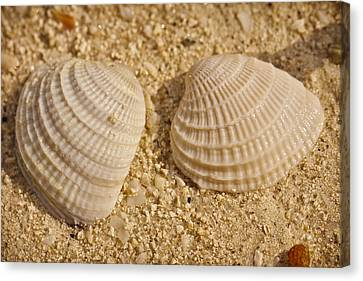 Nature Study Canvas Print - Two Shells by Adam Romanowicz