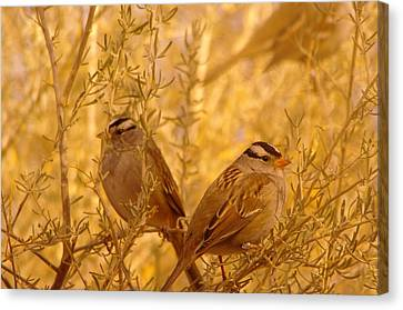 Two Small Birds Canvas Print by Jeff Swan