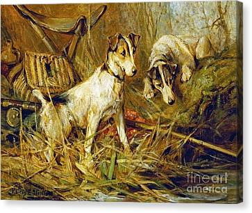 Two Smooth-haired Fox Terriers Canvas Print by Celestial Images