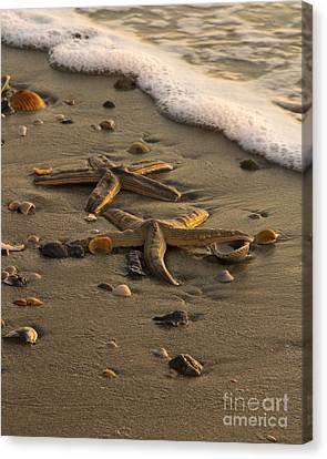 Canvas Print featuring the photograph Two Stars by Carrie Cranwill