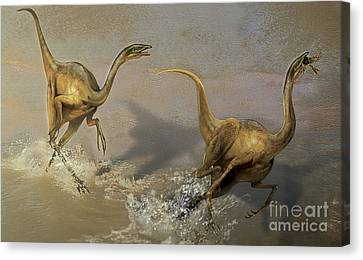 Food In Mouth Canvas Print - Two Struthiomimus Chasing Each Other by Jan Sovak