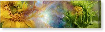 Two Sunflowers With Gaseous Nebula Canvas Print by Panoramic Images