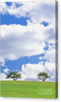 Two Trees Canvas Print by Alan L Graham