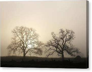 Two Trees In Fog Canvas Print