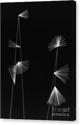 Two Trees In The Blackness Of Night Canvas Print by Steven Macanka
