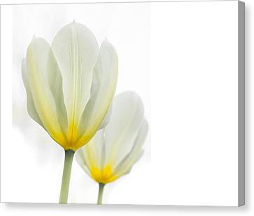 Two Tulips 1 Canvas Print by Peter Scott