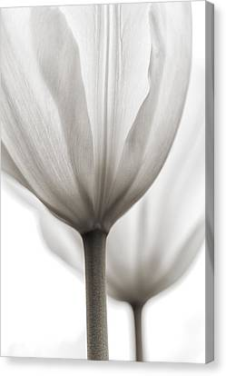 Two Tulips Bw 1 Canvas Print by Peter Scott