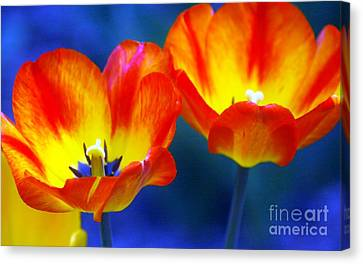 Two Tulips Canvas Print by Kathleen Struckle