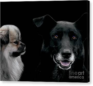 Two Types Of Mutts Canvas Print by Nola Lee Kelsey