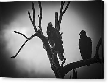 Canvas Print featuring the photograph Two Vultures by Bradley R Youngberg