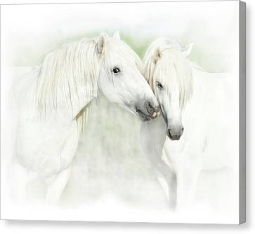 Two White Horses Of Camargue, French Canvas Print