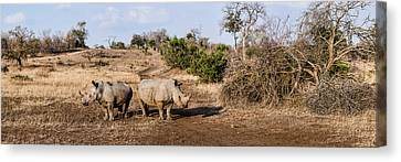 Two White Rhinoceros Ceratotherium Canvas Print by Panoramic Images
