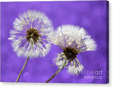 Two Wishes Canvas Print by Krissy Katsimbras