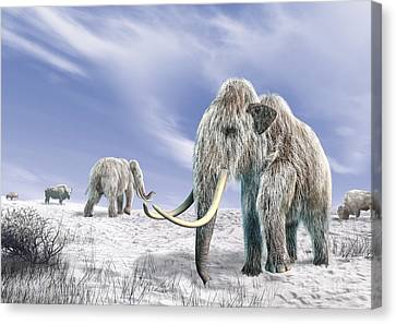 Two Woolly Mammoths In A Snow Covered Canvas Print