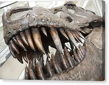 Tyrannosaurus Rex Skull Canvas Print by Science Photo Library