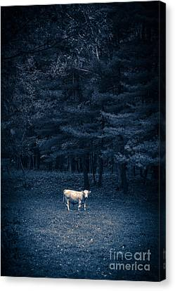 Udder The Moo Night Canvas Print