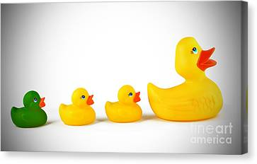 Ugly Duckling Canvas Print by Brandon Alms