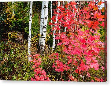 Red Leaf Canvas Print - Uinta Colors by Chad Dutson