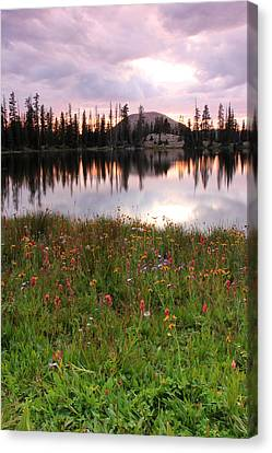 Uinta Wildflowers Canvas Print by Johnny Adolphson