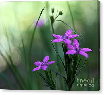 Ultra Violet Canvas Print