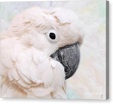 Umbrella Cockatoo Canvas Print