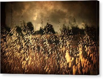 Rainy Canvas Print - Un Illusione by Taylan Apukovska