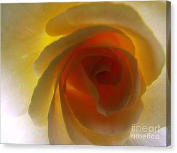 Canvas Print featuring the photograph Unaltered Rose by Robyn King