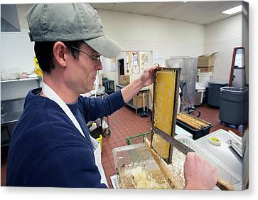 Beeswax Canvas Print - Uncapping Honeycomb by Jim West