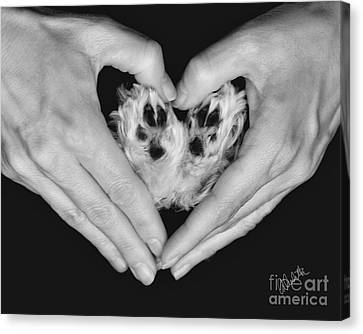 Unconditional Love Canvas Print by Andrea Auletta