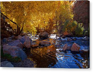 Under A Gold Canopy Canvas Print by Jim Garrison