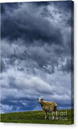 Under A Leaden Sky Canvas Print by Thomas R Fletcher