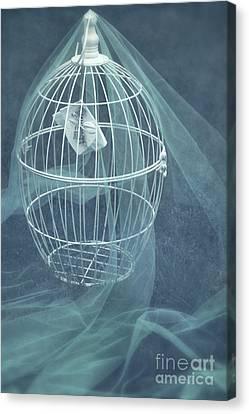Under A Veil  Canvas Print by Svetlana Sewell
