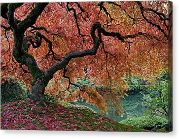 Under Fall's Cover Canvas Print by Wes and Dotty Weber