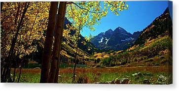 Under Golden Trees Canvas Print
