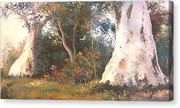 Under The Ancient Gum Tees Canvas Print by Jan Matson
