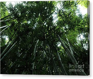 Under The Bamboo Haleakala National Park  Canvas Print by Vivian Christopher