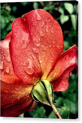 Under The Blossom Canvas Print